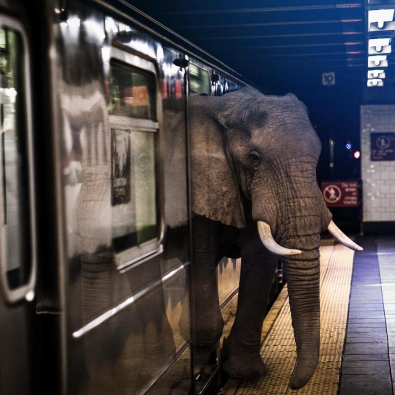 Фотоманипуляция Слон и метро