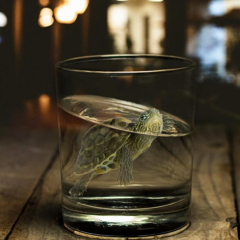 Фотоманипуляция Черепаха в стакане