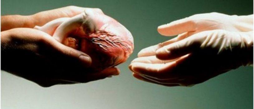 Взрослое мужество или немного о трансплантации органов