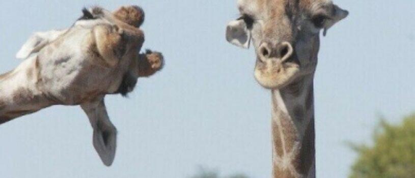 Уморительные фото животных!
